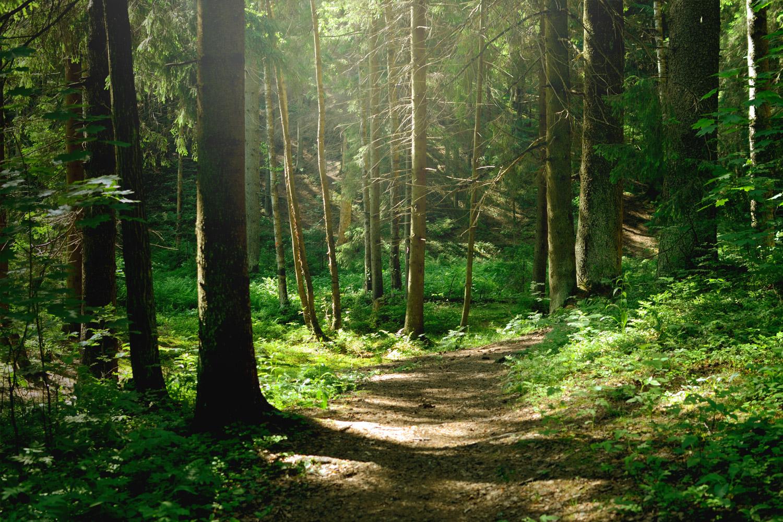 GALLETTO Skup i sprzedaż runa leśnego